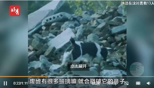 天游平台注册地址汶川地震救援最后一只搜救犬冰洁离世,曾勇救13人!