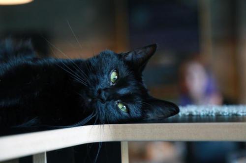 咖啡馆Purringtons Cat Lounge