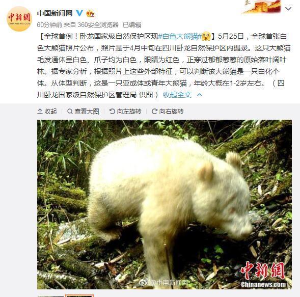 全球首例!卧龙国家级自然保护区现白色大熊猫   _法国新闻_法国中文网
