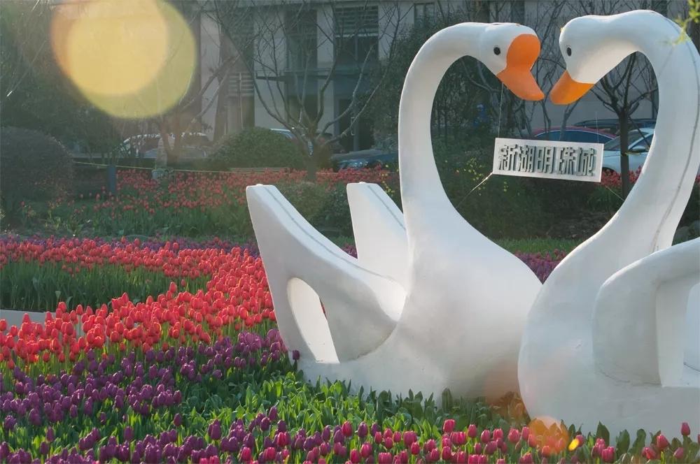 新湖中宝:上海旧改的坚守者