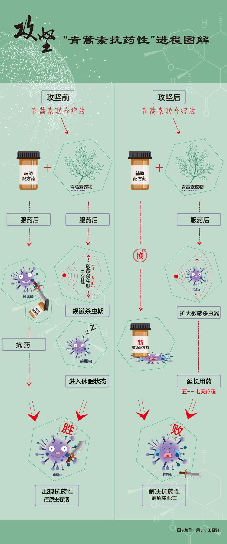 """屠呦呦团队青蒿素新突破 深入研究抗疟机理攻坚""""青蒿素抗药性""""难"""