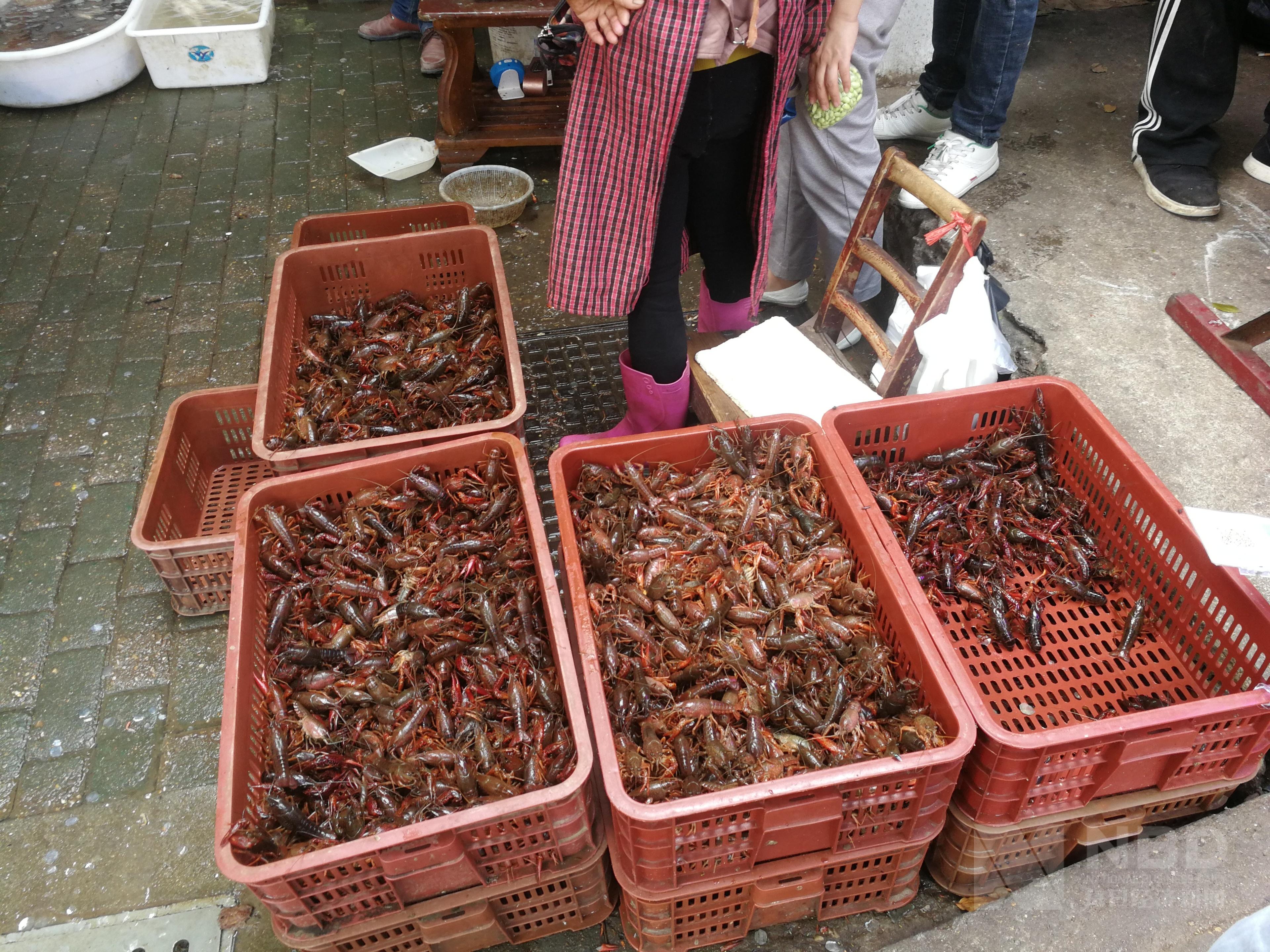 """虾苗价同比跌50% 疫情加速小龙虾产业调整:以前""""大养虾""""以后""""养大虾 """""""