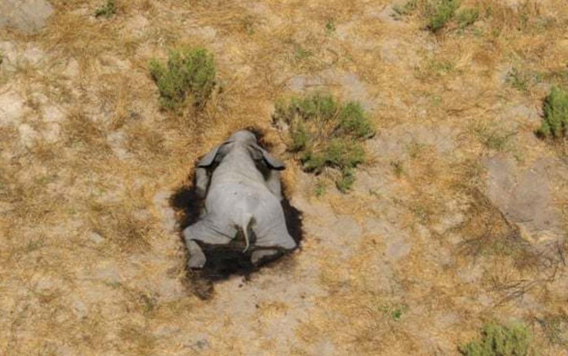 非洲350头大象接连离奇死亡,