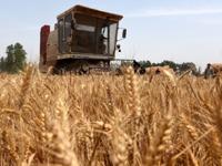 农业农村部:预计生猪供应相对过剩局面仍将持续,如不实质性调减产能,猪价低迷态势难以扭转