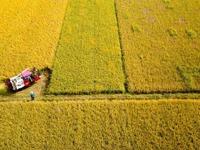 商务预报:10月12日至18日食用农产品价格有所下降 生产资料价格小幅上涨
