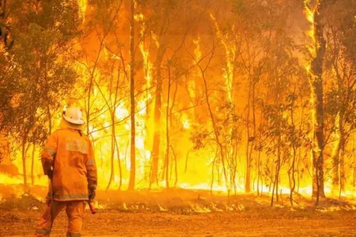 澳洲山火蔓延近1000公里,悉尼告急!已有3人遇难,350只考拉死亡| 每经网